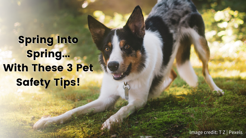 Spring into Spring with These 3 Pet Safety Tips